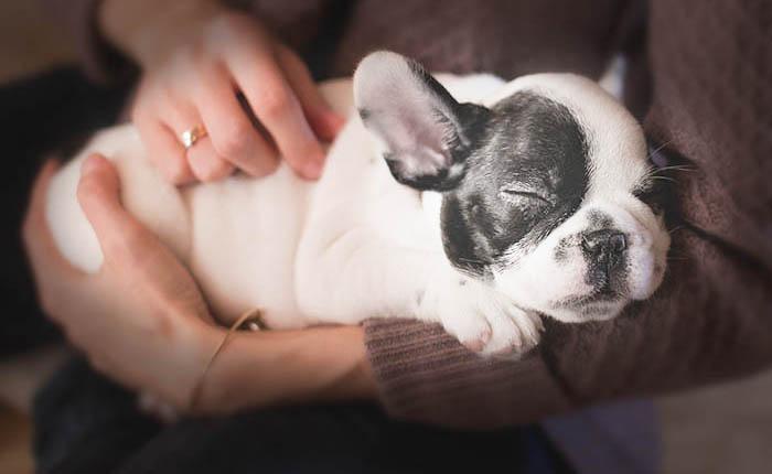 Je hond laten inslapen is een moeilijke beslissing. Hoe gaat dat?