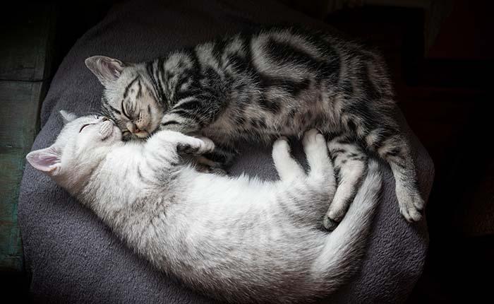 Twee katten op de bank. Beste maatjes. Na overlijden rouwen katten ook.