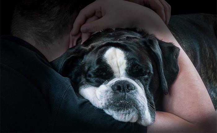 Hond, Boxer, in armen van man.