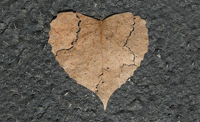 Herfstblad in vorm van gebroken hart op straat. Destructie is geen waardig afscheid van je huisdier.