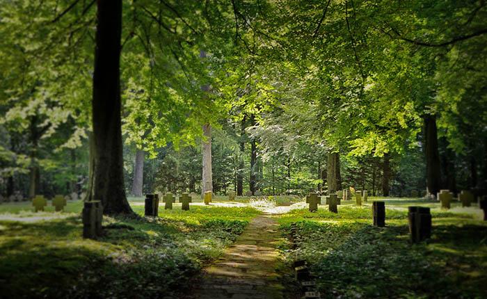 Dierenbegraafplaats in bos. Hond, kat of ander huisdier begraven in het bos.