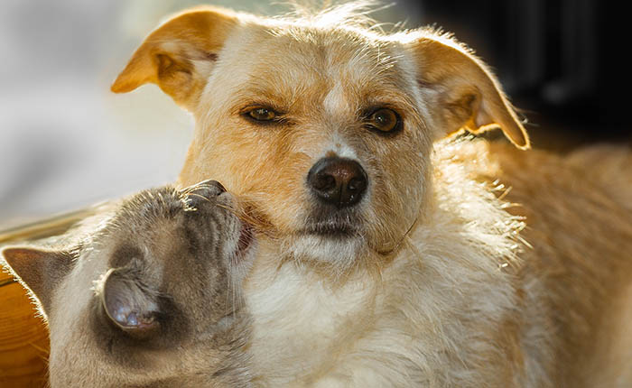 Hond en kat samen in de zon.