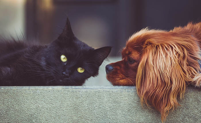 hond en kat op de bank. dikke maatjes. bij overlijden rouwen honden en katten ook.