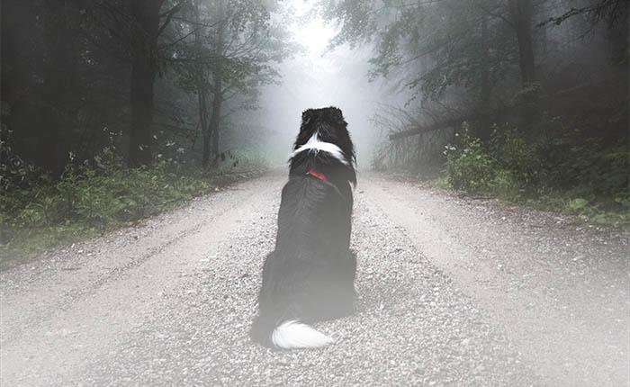 Hond zit in een mistig bos te wachten. Bij zijn afscheid is gekozen voor resomeren. Een groene en milieuvriendelijke uitvaart.