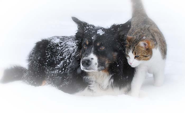 hond en kat samen in de sneeuw. honden en katten rouwen ook en moeten ook het verlies van een huisdier verwerken