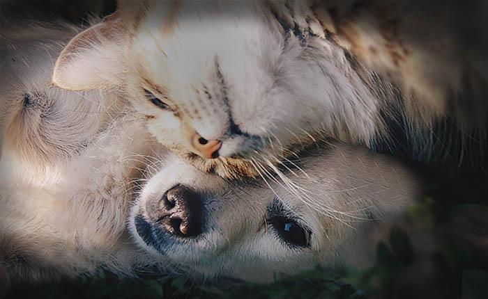 kat en hond liggen bij elkaar