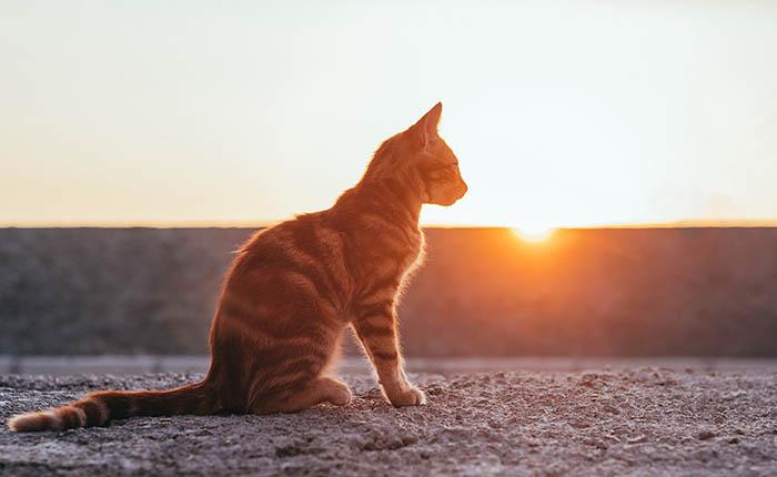Kat kijkt naar ondergaande zon. Na het overlijden doneren aan de wetenschap.