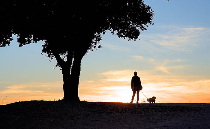 man of vrouw onder boom met hond aan de lijn. Kijken naar de zonsondergang.