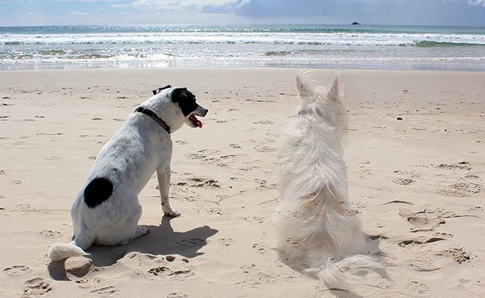 Twee honden op het strand aan de zee. Honden moeten ook het verlies van een maatje verwerken.