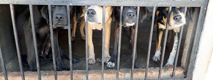 honden achter tralies in klein hok.